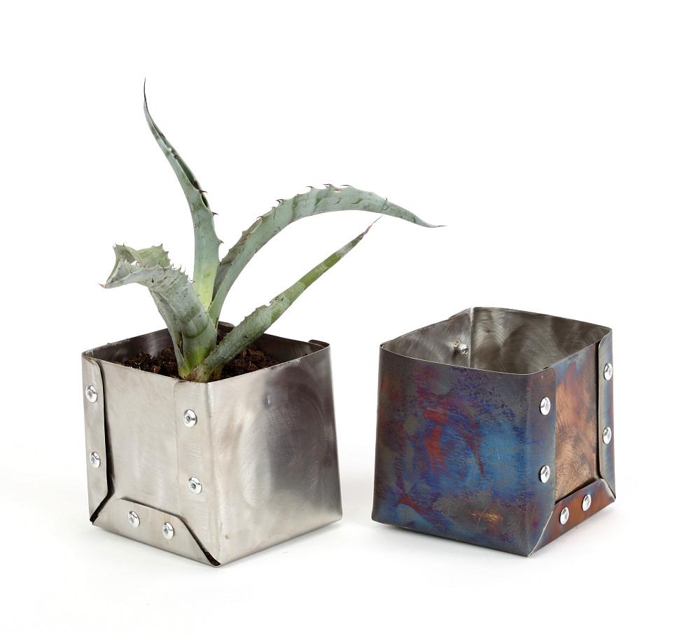 Cactus Gift Ideas