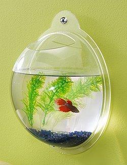 Wall Fish Aquarium