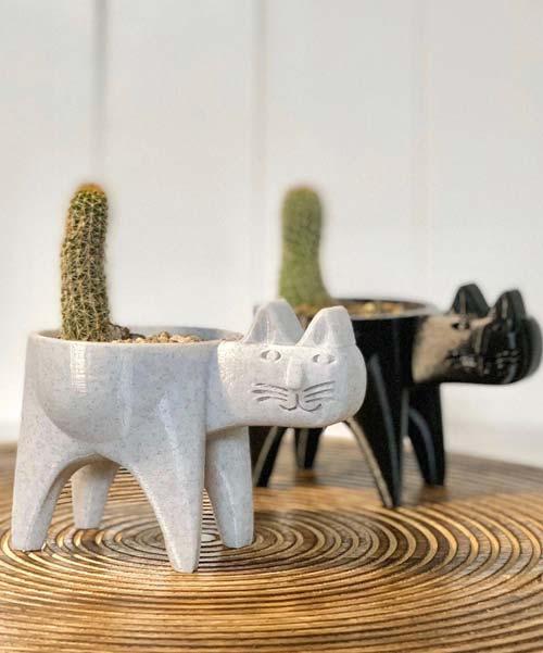 Cute Cat Cactus Catchers!