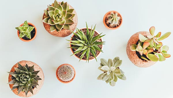Planter Gift Ideas