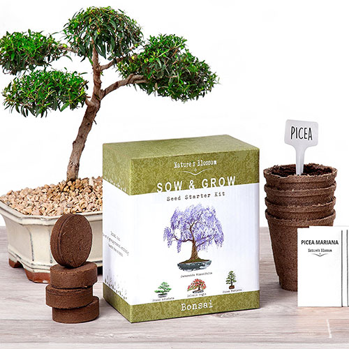 Radiologist Gift Ideas: Bonsai Tree