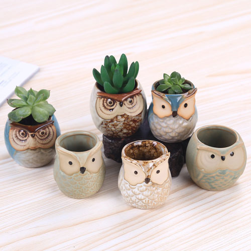 Urology Office Gifts - Cute Owl Planters for Succulents