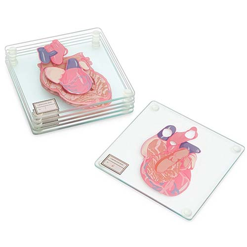 Heart Cross Section Coasters - Gift Ideas for Cardiologists