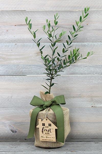 Best Tree Gift Ideas