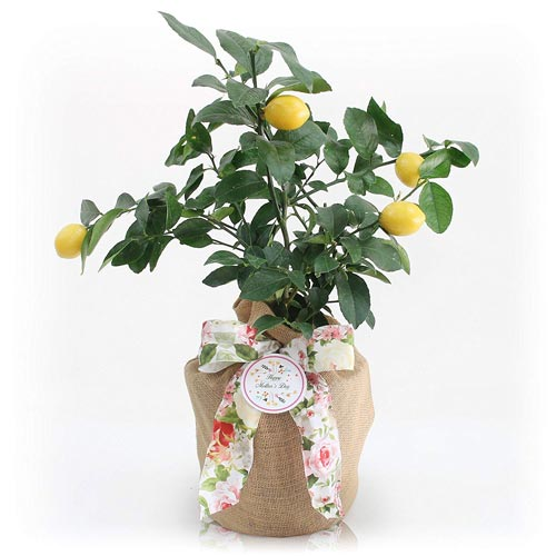 Tree Gifts: Give a Fruit Tree
