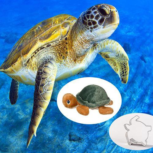 Sea Turtle Adoption Pack