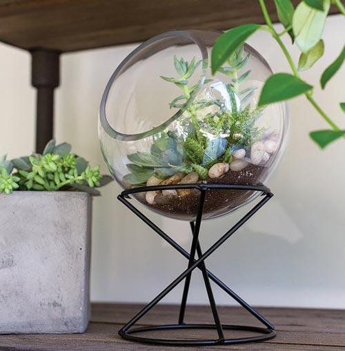 Table-top terrarium men's gift idea