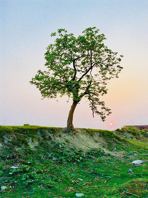 A Tree in Your Name