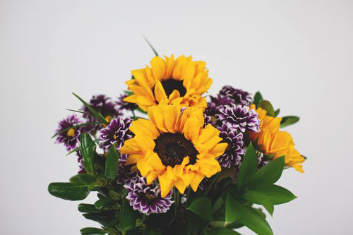 Amazing Flower Subscriptions