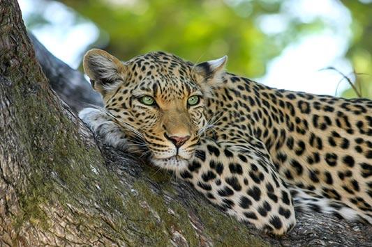 9 Year Old Gifts: Adopt Wildlife