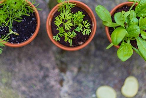 Eco-Friendly Kitchen Herb Garden