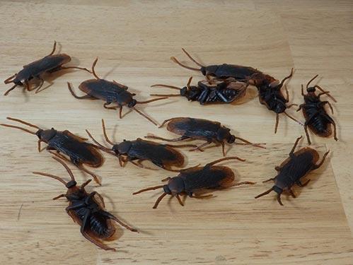 Realistic Cockroach Prank