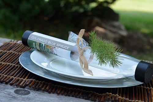 Small Tree Saplings for Gardeners
