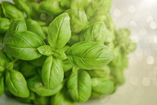 Grow Herbs from Your Own Home