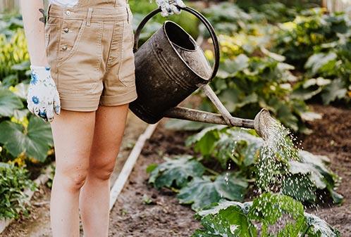 Surprise Gift Ideas: Build a Garden