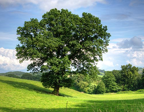 A Tree Planted in Your Name